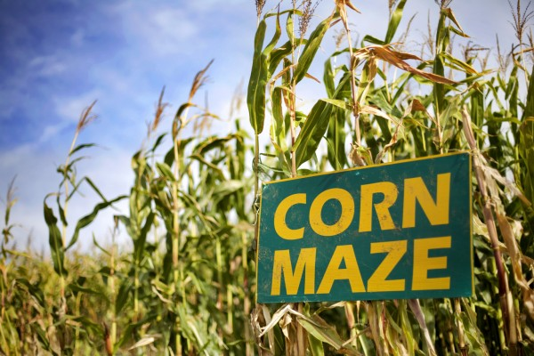 Corn Maze sign in cornfield